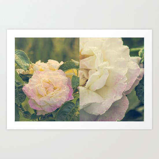 Summer's Rose Art Print