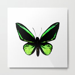 TropicalGreen Butterfly Painting Metal Print