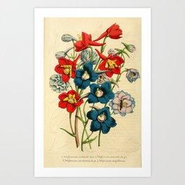 Flower delphinium cardinale delphinium azureum delphinium coernlescens delphinium magnificum13 Art Print