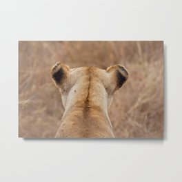 Lion on the savanna of Serengeti National Park, Tanzania   Travel photography Africa Metal Print