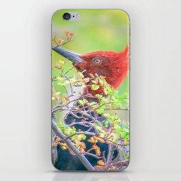 Woodpecker at Forest Pecking Tree, Patagonia, Argentina iPhone Skin