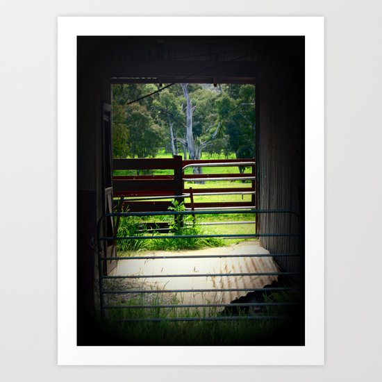Looking through an old cattle Shed Art Print