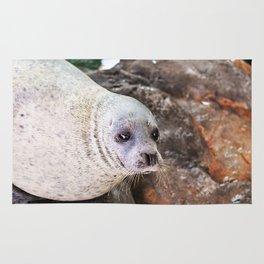 Seal on rock Rug