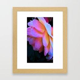 Large Pink Flower Soft Petals Framed Art Print