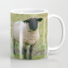 Hore Abby, Ireland ~ Mr.Sheep Coffee Mug