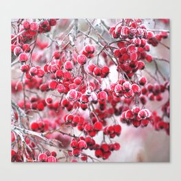 Icy Rowan Red Berries Winter Scene #decor #society6 #buyart Canvas Print