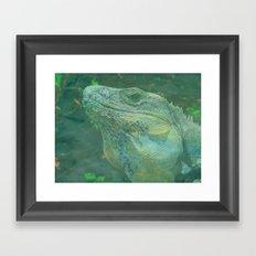 Wild Iguana Framed Art Print