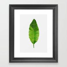Banana Leaf Framed Art Print
