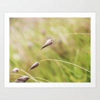 Among the Grass Art Print