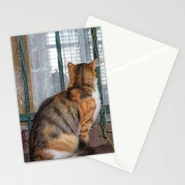 Tabby Stationery Cards