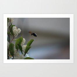 Carpenter Bee Landing Art Print