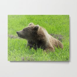 Alaska Bear Eating Grass 2 Metal Print
