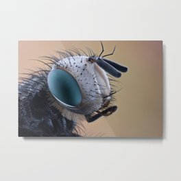 Insect II Metal Print
