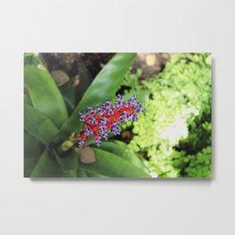 Bromeliad Tropical Plant Metal Print