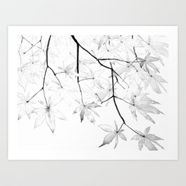black and white maple leaves Art Print