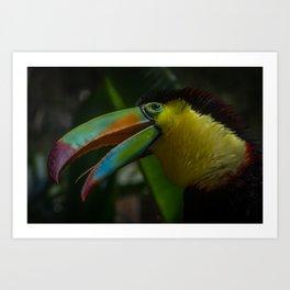Toucan at Bird Rescue Art Print