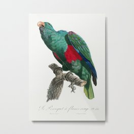 The Eclectus Parrot, Eclectus roratus from Natural History of Parrots (1801—1805) by Francois Levail Metal Print