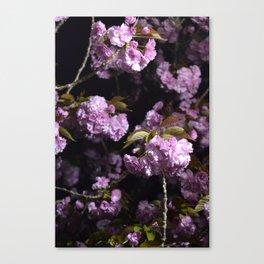 Goodnight Sakura  Canvas Print