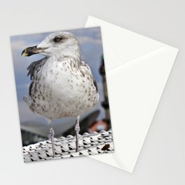 Baltic SEAGULL on the beach chair Stationery Cards
