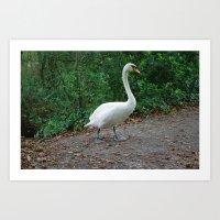 black swan Art Prints featuring Swan by DEB VINCENT