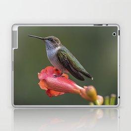 Humming bird resting on a flower Laptop & iPad Skin