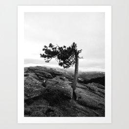 Pine Tree on Sentinel Dome Art Print