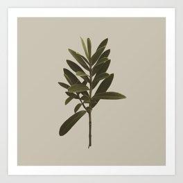 Plant Variations 1 Art Print