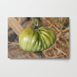 Heirloom Tomato  Metal Print