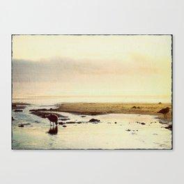 oregon coast seagulls Canvas Print