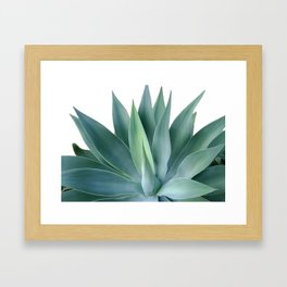 Agave blanco Framed Art Print