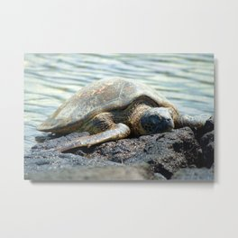 Turtle - Rest After Your Long Journey Metal Print