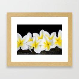 Plumeria obtusa Singapore White Framed Art Print