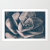 succulent Art Prints featuring Succulent  by Jessica Reiss