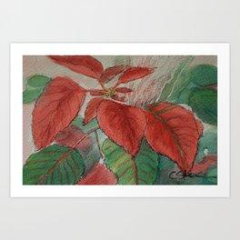 Poinsettia WC161122g Art Print