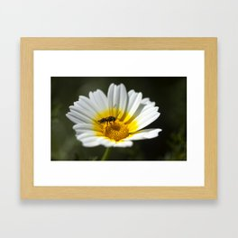 Wild wasp in a daisy Framed Art Print
