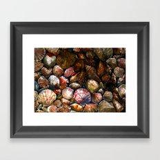 Shell 1 Framed Art Print