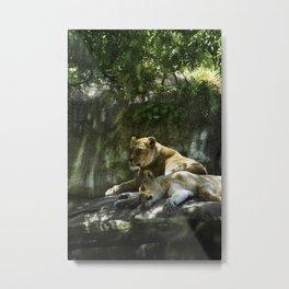 Portland Lioness Metal Print