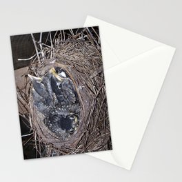 Baby robins in nest (fledglings) Stationery Cards