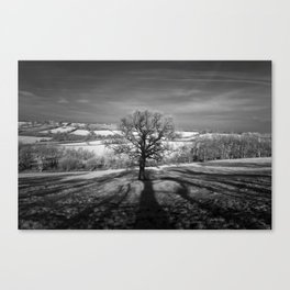 Lone tree over the East Somerset Railway Canvas Print
