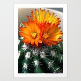 Tri Cactus Flowers Art Print