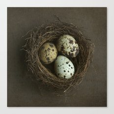 Speckled Eggs and Nest Canvas Print