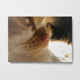 Cute Cat Face Metal Print