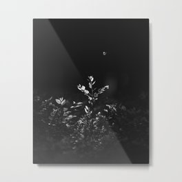 Nature Shots in Black and White. || Butterfly. Forests. || Leaves. || Brunches. || Latvia. || Latvia Metal Print
