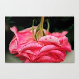 Fallen Pink Rose flower Canvas Print