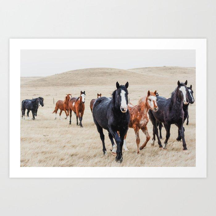 Wild Horses In the Field Kunstdrucke