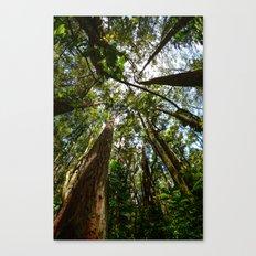 Hawaii Woods Canvas Print