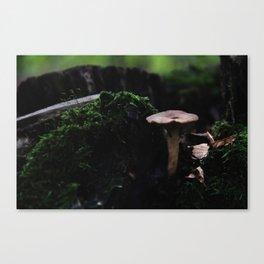 Fungi I Canvas Print