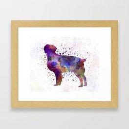 Brittany Spaniel in watercolor Framed Art Print