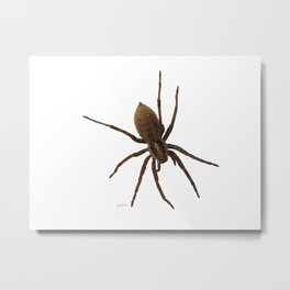 House spiders Metal Print