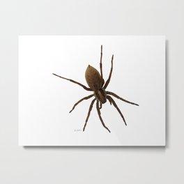 House spiders Metal Print